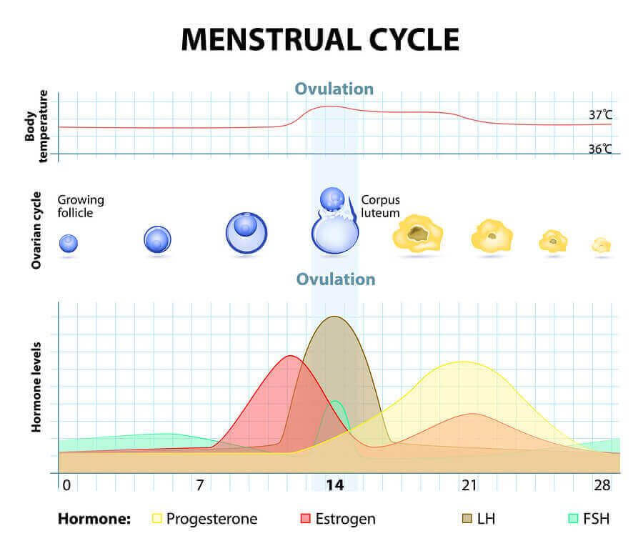Pille danach menstruation