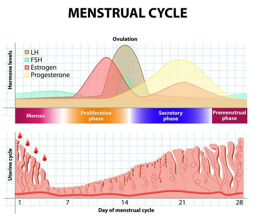 clearblue digital ovulationstest