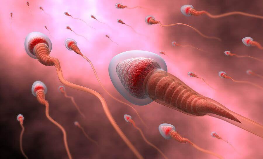 Spermiogramm-Werte welche Referenzwerte sind normal?