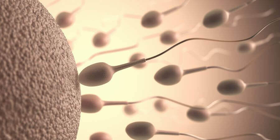 Spermienqualität bei täglichem GV wann sind Spermien am fruchtbarsten