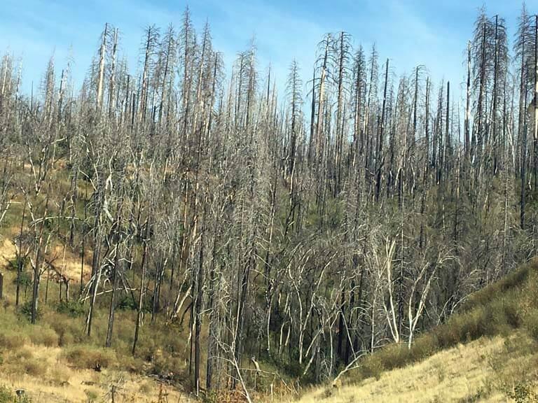 Krise als Chance Friedhof der Bäume