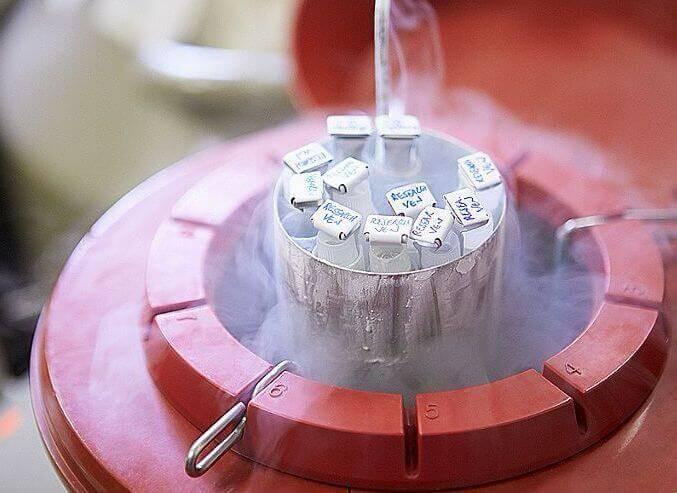 Kryozyklus Chancen sind eingefrorene Embryonen besser als frische Embryonen